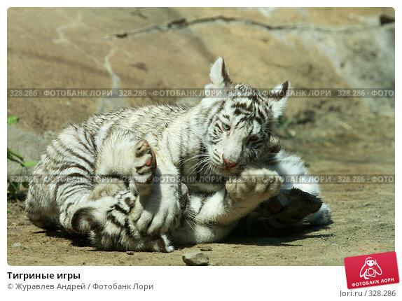Тигриные игры, эксклюзивное фото № 328286, снято 18 июня 2008 г. (c) Журавлев Андрей / Фотобанк Лори