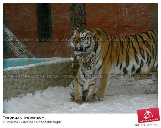 Тигрица с тигренком, фото № 293730, снято 17 ноября 2007 г. (c) Tyurina Ekaterina / Фотобанк Лори
