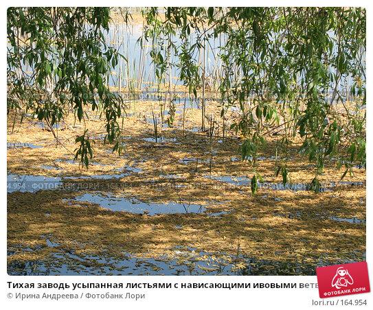 Тихая заводь усыпанная листьями с нависающими ивовыми ветвями, фото № 164954, снято 22 мая 2007 г. (c) Ирина Андреева / Фотобанк Лори