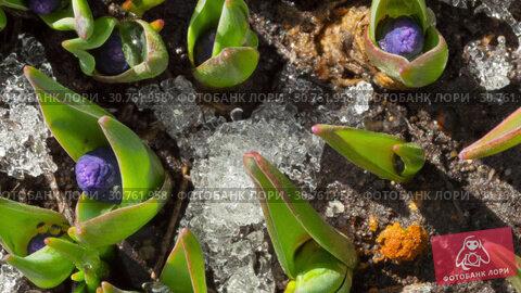 Купить «Time-Lapse shot of melting snow», видеоролик № 30761958, снято 21 апреля 2019 г. (c) Игорь Жоров / Фотобанк Лори