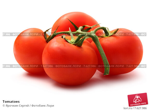 research papers on tomatoes Writing a paper on genetics is, therefore, a worthwhile venture for most scholars, and it is highly likely that you will encounter such an assignment to this, choosing the right topic will reduce the difficulty of writing a good research paper by ensuring that the topic has enough credible resources to research.