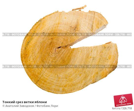Тонкий срез ветки яблони, фото № 326718, снято 8 июля 2007 г. (c) Анатолий Заводсков / Фотобанк Лори