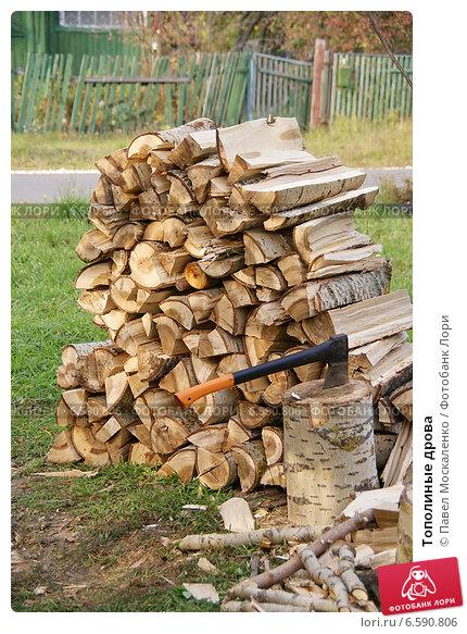 Купить «Тополиные дрова», фото № 6590806, снято 27 сентября 2014 г. (c) Павел Москаленко / Фотобанк Лори