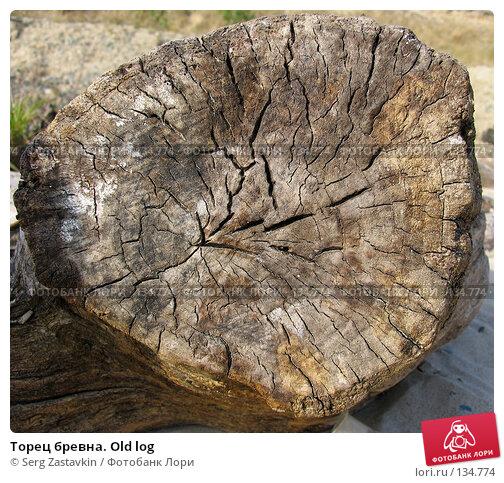 Торец бревна. Old log, фото № 134774, снято 2 октября 2005 г. (c) Serg Zastavkin / Фотобанк Лори