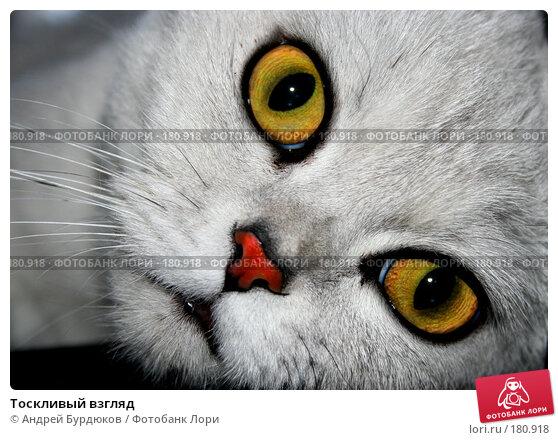 Тоскливый взгляд, фото № 180918, снято 2 апреля 2006 г. (c) Андрей Бурдюков / Фотобанк Лори