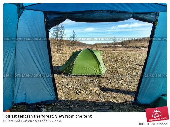 Купить «Tourist tents in the forest. View from the tent», фото № 28926586, снято 16 июня 2017 г. (c) Евгений Ткачёв / Фотобанк Лори