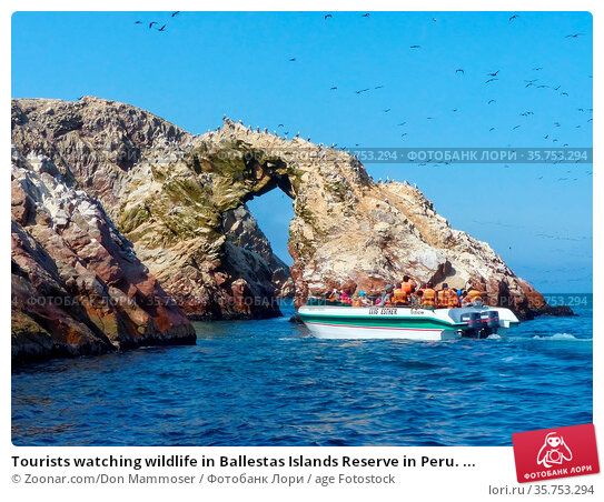 Tourists watching wildlife in Ballestas Islands Reserve in Peru. ... Стоковое фото, фотограф Zoonar.com/Don Mammoser / age Fotostock / Фотобанк Лори