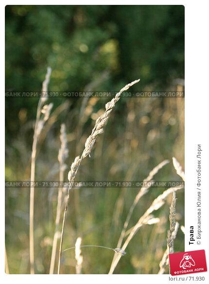 Трава, фото № 71930, снято 11 августа 2007 г. (c) Биржанова Юлия / Фотобанк Лори