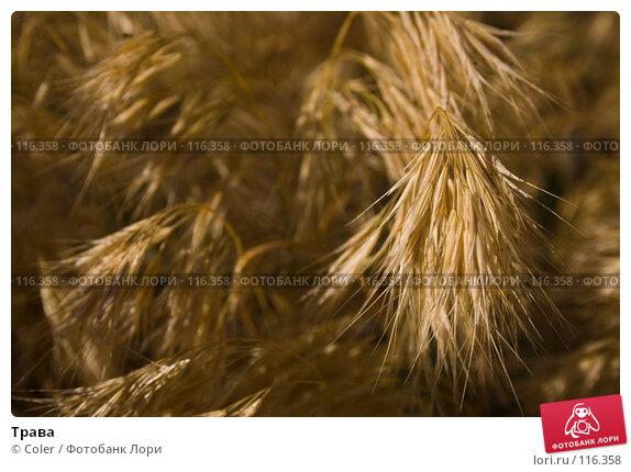 Трава, фото № 116358, снято 6 июня 2007 г. (c) Coler / Фотобанк Лори