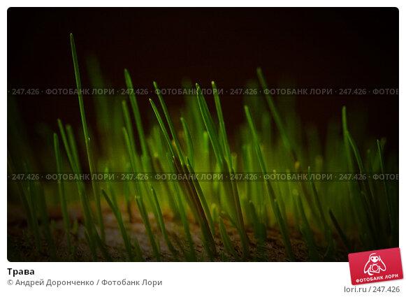 Трава, фото № 247426, снято 29 марта 2017 г. (c) Андрей Доронченко / Фотобанк Лори