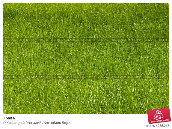 Трава, фото № 266266, снято 29 апреля 2005 г. (c) Кравецкий Геннадий / Фотобанк Лори