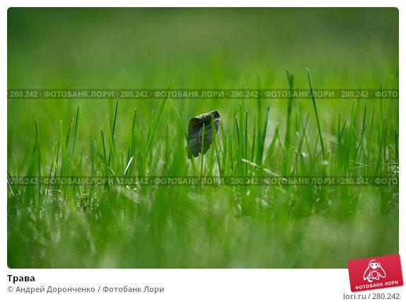 Купить «Трава», фото № 280242, снято 11 мая 2008 г. (c) Андрей Доронченко / Фотобанк Лори