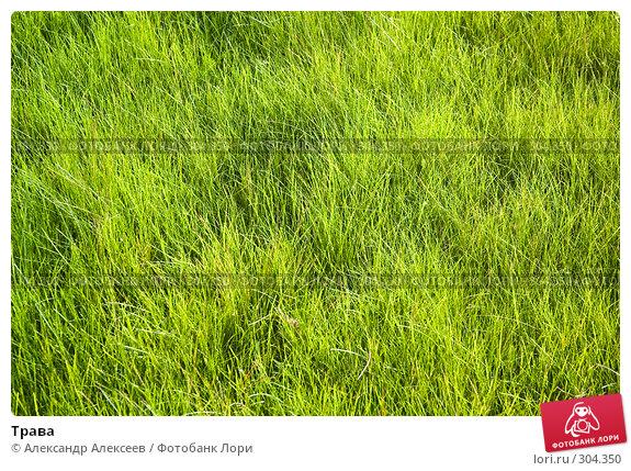 Купить «Трава», эксклюзивное фото № 304350, снято 28 мая 2008 г. (c) Александр Алексеев / Фотобанк Лори