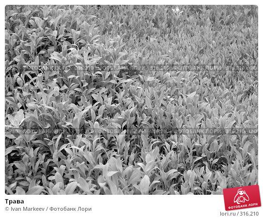 Трава, фото № 316210, снято 9 июня 2008 г. (c) Василий Каргандюм / Фотобанк Лори