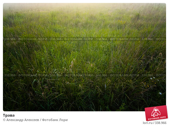 Трава, эксклюзивное фото № 338966, снято 27 июня 2008 г. (c) Александр Алексеев / Фотобанк Лори