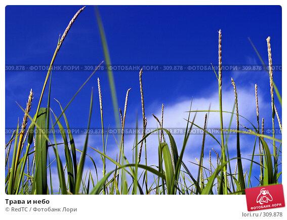 Трава и небо, фото № 309878, снято 4 июня 2008 г. (c) RedTC / Фотобанк Лори