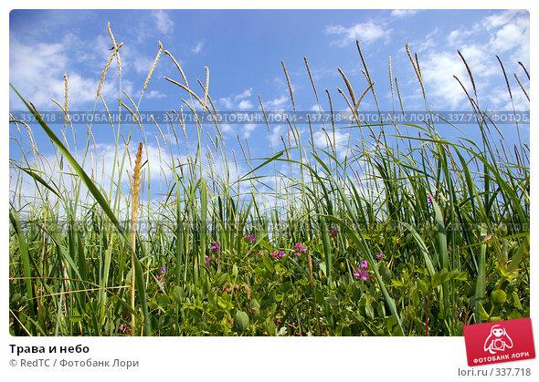 Трава и небо, фото № 337718, снято 25 июня 2008 г. (c) RedTC / Фотобанк Лори