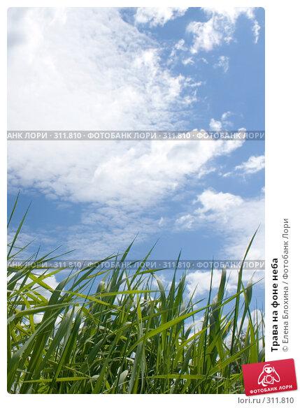 Трава на фоне неба, фото № 311810, снято 2 июня 2008 г. (c) Елена Блохина / Фотобанк Лори