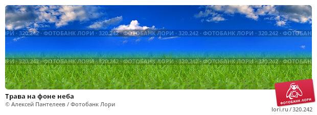 Трава на фоне неба, фото № 320242, снято 26 апреля 2008 г. (c) Алексей Пантелеев / Фотобанк Лори