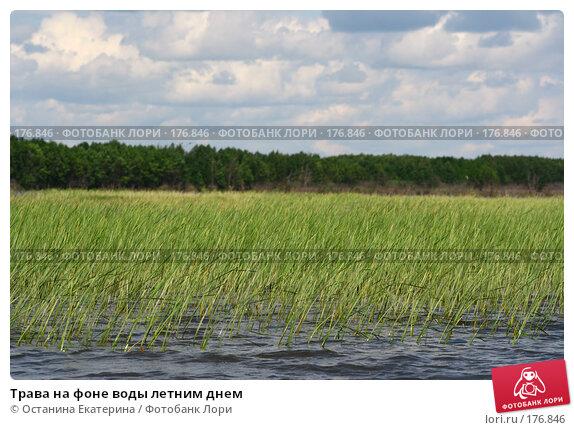 Трава на фоне воды летним днем, фото № 176846, снято 24 июня 2007 г. (c) Останина Екатерина / Фотобанк Лори