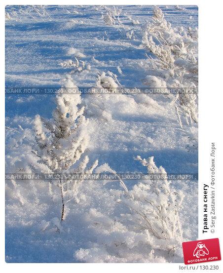 Трава на снегу, фото № 130230, снято 18 декабря 2005 г. (c) Serg Zastavkin / Фотобанк Лори