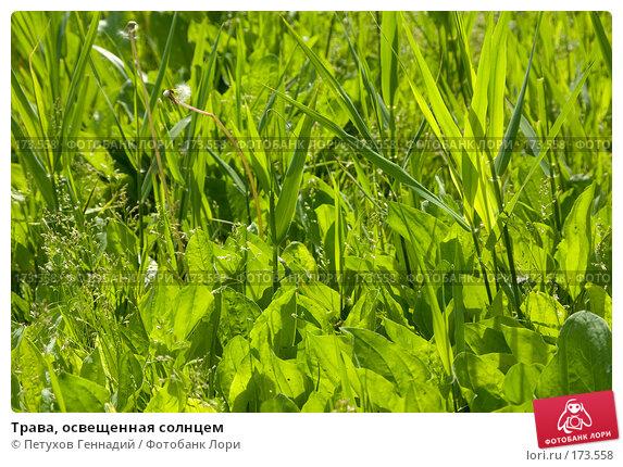 Трава, освещенная солнцем, фото № 173558, снято 29 мая 2007 г. (c) Петухов Геннадий / Фотобанк Лори