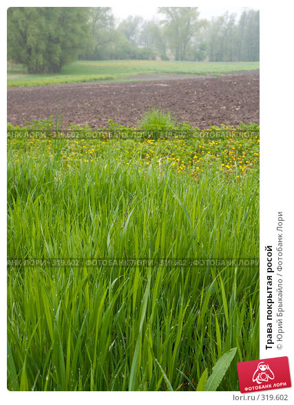 Трава покрытая росой, фото № 319602, снято 3 мая 2008 г. (c) Юрий Брыкайло / Фотобанк Лори