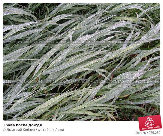 Купить «Трава после дождя», фото № 275250, снято 9 сентября 2007 г. (c) Дмитрий Кобзев / Фотобанк Лори