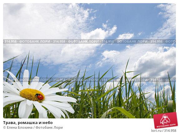 Трава, ромашка и небо, фото № 314958, снято 2 июня 2008 г. (c) Елена Блохина / Фотобанк Лори