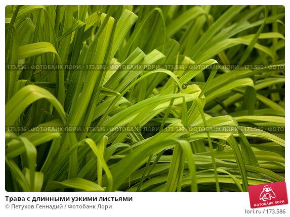 Трава с длинными узкими листьями, фото № 173586, снято 8 июля 2007 г. (c) Петухов Геннадий / Фотобанк Лори
