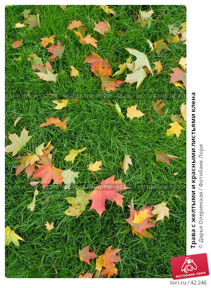 Трава с желтыми и красными листьями клена, фото № 42246, снято 11 сентября 2005 г. (c) Дарья Олеринская / Фотобанк Лори