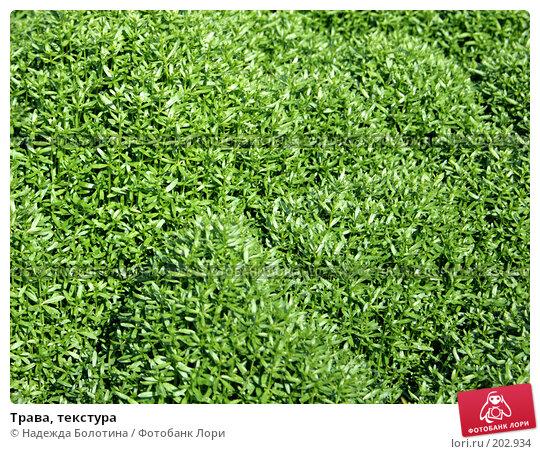 Трава, текстура, фото № 202934, снято 19 мая 2007 г. (c) Надежда Болотина / Фотобанк Лори