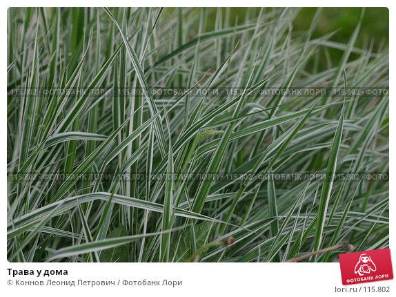 Трава у дома, фото № 115802, снято 27 мая 2007 г. (c) Коннов Леонид Петрович / Фотобанк Лори