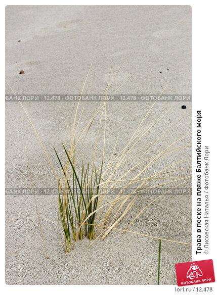 Трава в песке на пляже Балтийского моря, фото № 12478, снято 2 мая 2006 г. (c) Лисовская Наталья / Фотобанк Лори