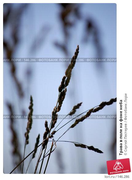 Трава в поле на фоне неба, фото № 146286, снято 23 июня 2007 г. (c) Сергей Пестерев / Фотобанк Лори