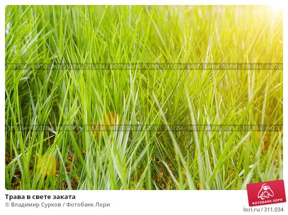 Трава в свете заката, фото № 311034, снято 9 мая 2008 г. (c) Владимир Сурков / Фотобанк Лори