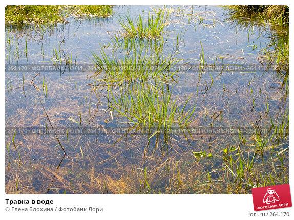 Купить «Травка в воде», фото № 264170, снято 25 апреля 2008 г. (c) Елена Блохина / Фотобанк Лори