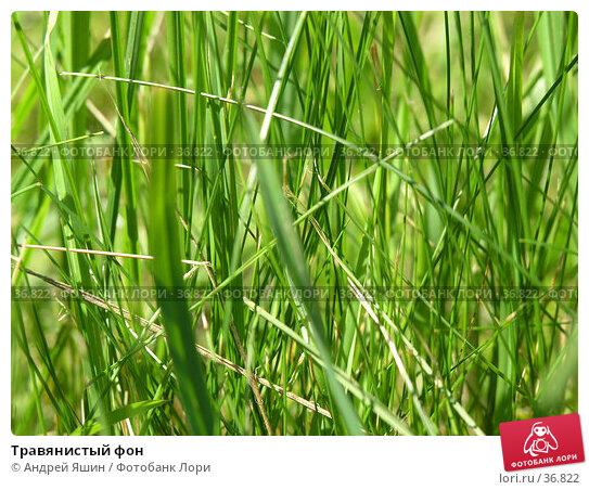 Травянистый фон, фото № 36822, снято 10 июля 2005 г. (c) Андрей Яшин / Фотобанк Лори
