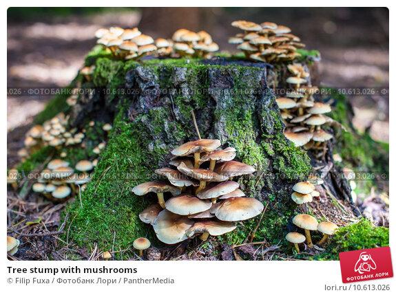 Tree stump with mushrooms. Стоковое фото, фотограф Filip Fuxa / PantherMedia / Фотобанк Лори