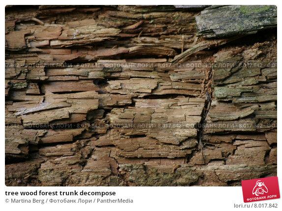 Купить «tree wood forest trunk decompose», фото № 8017842, снято 18 апреля 2019 г. (c) PantherMedia / Фотобанк Лори