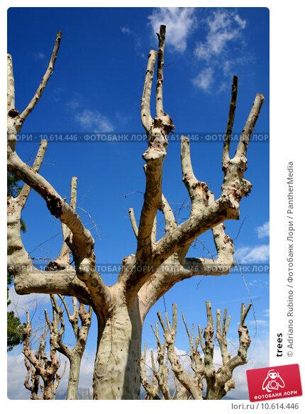 trees. Стоковое фото, фотограф Adriano Rubino / PantherMedia / Фотобанк Лори