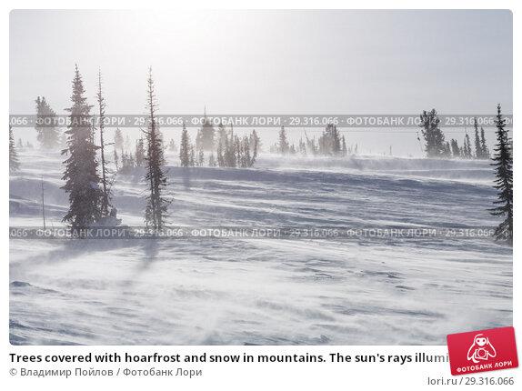 Купить «Trees covered with hoarfrost and snow in mountains. The sun's rays illuminate the trees.», фото № 29316066, снято 20 ноября 2018 г. (c) Владимир Пойлов / Фотобанк Лори