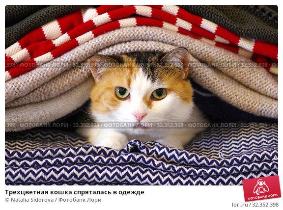 Купить «Трехцветная кошка спряталась в одежде», фото № 32352398, снято 31 октября 2019 г. (c) Natalya Sidorova / Фотобанк Лори