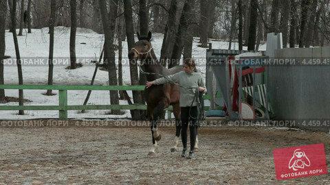 Купить «Тренировка лошади», видеоролик № 4459434, снято 31 марта 2013 г. (c) FotograFF / Фотобанк Лори