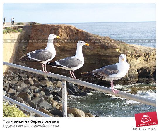 Три чайки на берегу океана, фото № 216390, снято 12 июня 2006 г. (c) Дима Рогожин / Фотобанк Лори