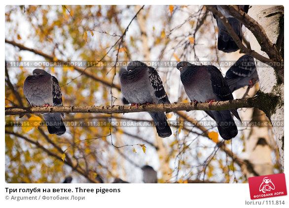 Три голубя на ветке. Three pigeons, фото № 111814, снято 5 ноября 2006 г. (c) Argument / Фотобанк Лори