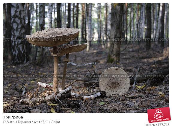 Три гриба, фото № 177718, снято 23 мая 2017 г. (c) Антон Тарасов / Фотобанк Лори