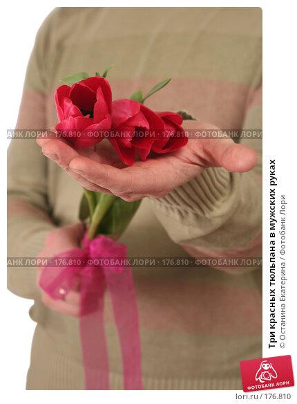 Три красных тюльпана в мужских руках, фото № 176810, снято 15 января 2008 г. (c) Останина Екатерина / Фотобанк Лори