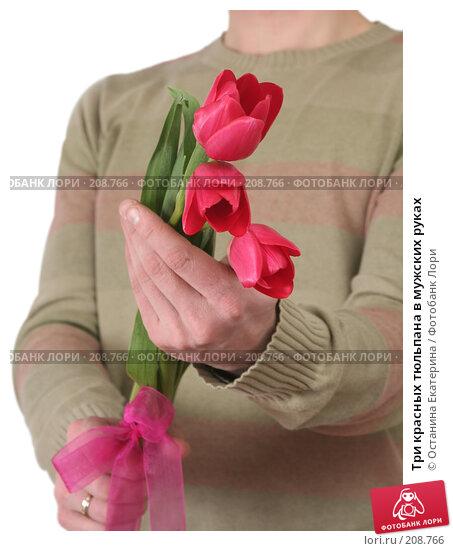 Три красных тюльпана в мужских руках, фото № 208766, снято 15 января 2008 г. (c) Останина Екатерина / Фотобанк Лори