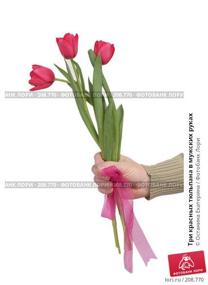 Купить «Три красных тюльпана в мужских руках», фото № 208770, снято 15 января 2008 г. (c) Останина Екатерина / Фотобанк Лори